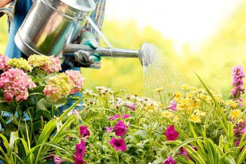 Как правильно следить за своим садом?